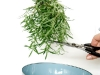 thumbs sky planter herbs